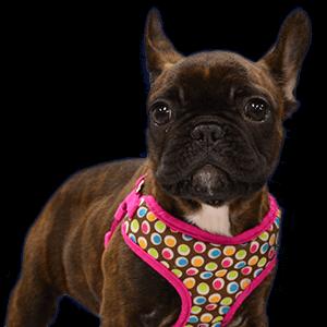 Expert Veterinary Marketing